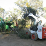 tree maintenance bendigo