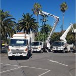 Bendigo tree maintenance